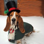 Dog Christmas Caroler Costume