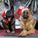 german-shepherd-xmas