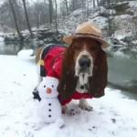 Basset Hound in Snow