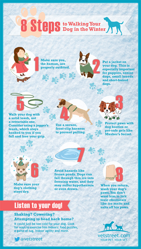 Walking Your Dog in Winter Infographic