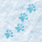 Walking Your Dog in Winter