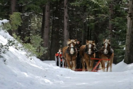 Yosemite Trails Sleigh Rides |  Fish Camp, California