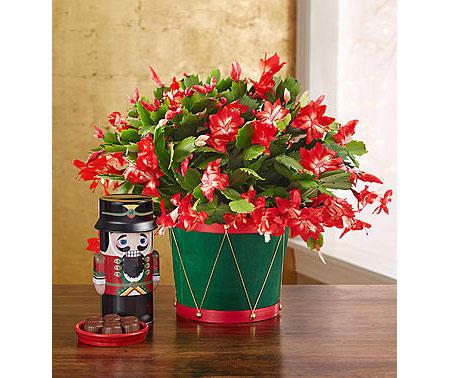 1800Flowers • Christmas Cactus